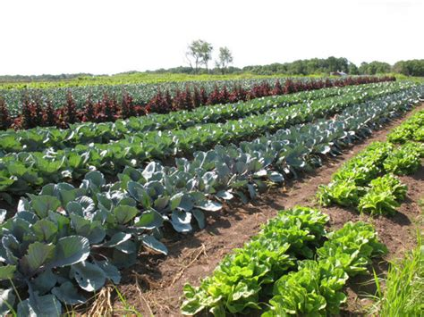 Garden Of Organic Farm Organic Farming And Its Impact Radium Engineering