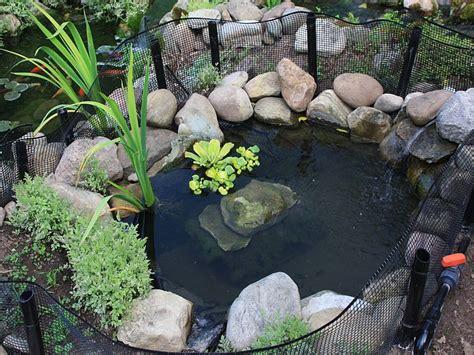 backyard turtle pond outdoor turtle pond designs home design mannahatta us