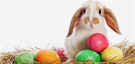 Cute Easter Meme - happy easter funny images meme funny easter memes