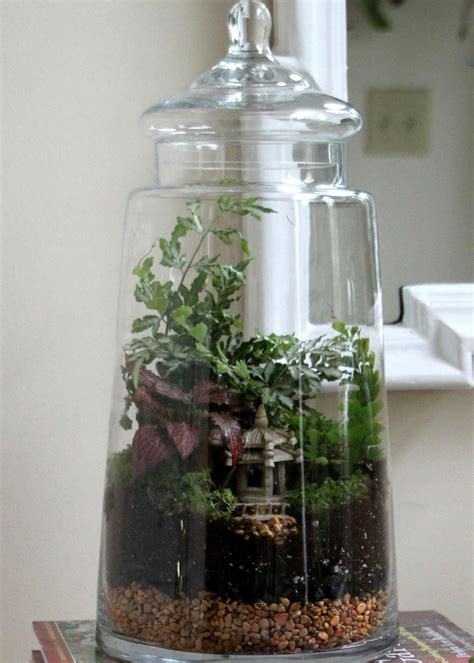 build  terrarium  tos diy
