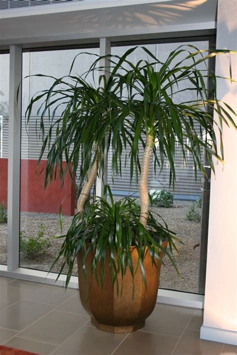 Home Decor Artificial Plants Yucca Potted Plants On Display Your 1 Plant Solution