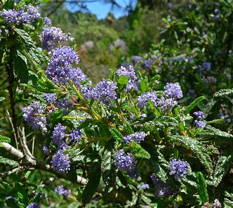 low evergreen shrubs things about trees