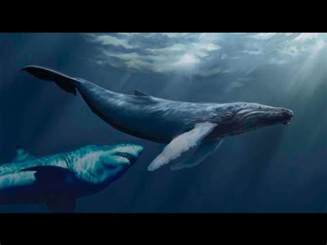 evidence of a 50 ton megalodon shark week discovery image gallery megalodon proof