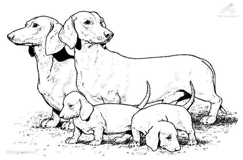 coloring pages of realistic dogs realistic coloring page coloring pages