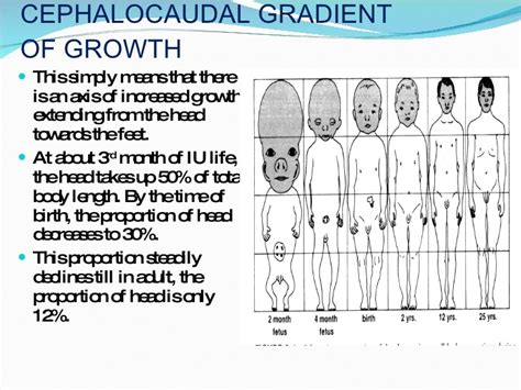 cephalocaudal pattern is from growth development of face and oral cavity