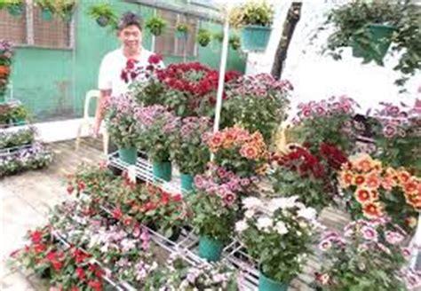 Jual Bibit Anggrek Kompot bisnis jual beli tanaman hias tanaman bunga hias