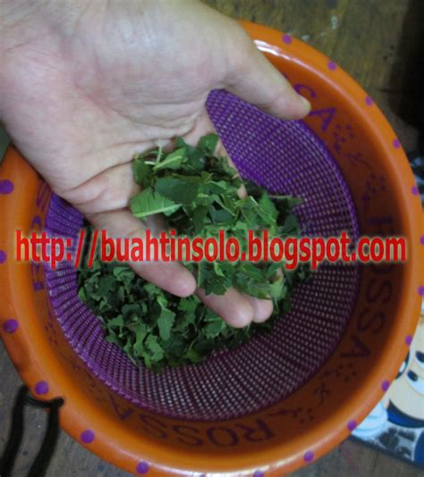 Teh Daun Tin teh daun tin herbal untuk mengatasi sakit batu ginjal toko herbal tokoherbalsolo