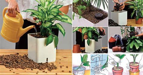 vasi per idrocoltura idrocoltura come coltivare piante senza terra fai da