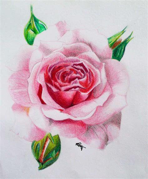 lukisan bunga mawar  pensil jual poster  juragan