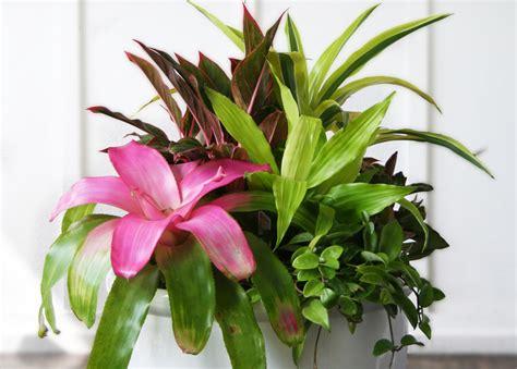 indoor plants arrangement ideas beautiful indoor plant arrangements images interior