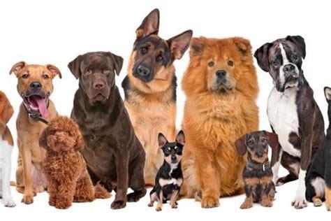 perros todas clases razas de perro todos los tipos que existen y sus