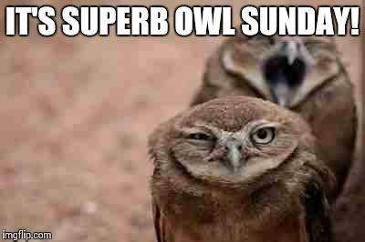 Superb Owl Meme - annoyed owl imgflip