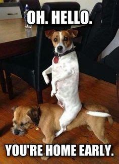 joke  touching   dog google search funny dogs
