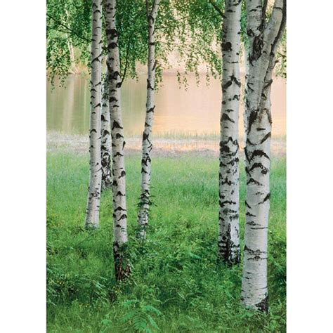 ideal decor wall murals ideal decor 100 in x 72 in nordic forest wall mural