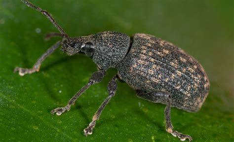 käfer im garten k 228 fer pflanzenschutz selbst de