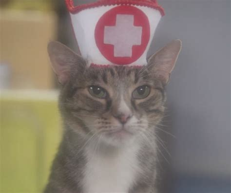 cat and hospital cat hospital