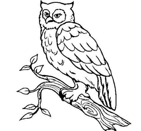 barn owl coloring page