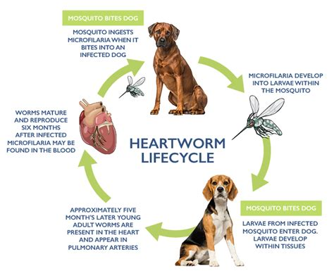 why i don t give my dogs heartworm meds