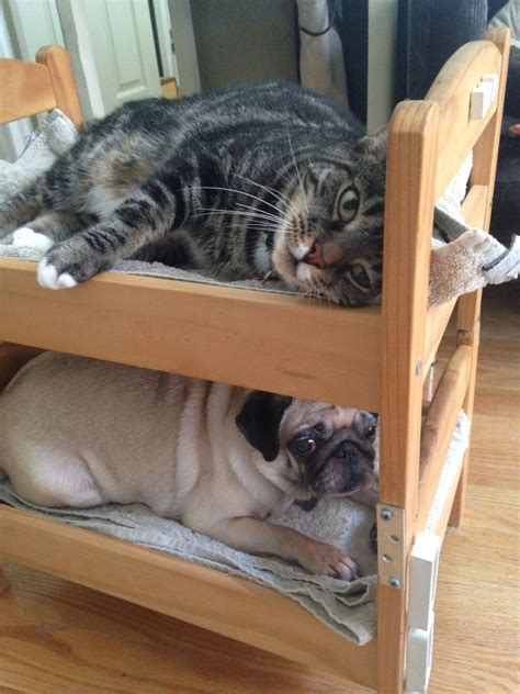 ikea cat bed can a dog and a cat be bunk bed mates seems so ikea