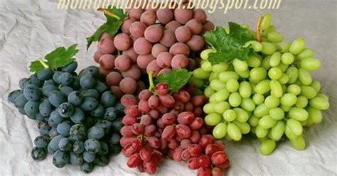 meramu buah anggur  kesehatan  kecantikan