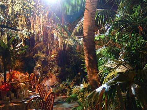 rainforest themed events palmbrokers event props and plants hire portfolio