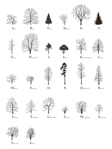tree architecture drawing 77 best images about landscape park garden on