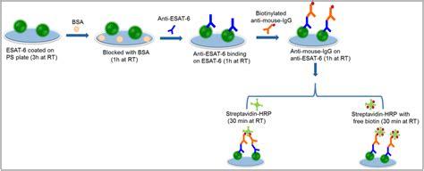 streptavidin protocol schematic representation of esat 6 detection by the biotin