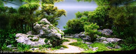 this is the amazing of aquascaping