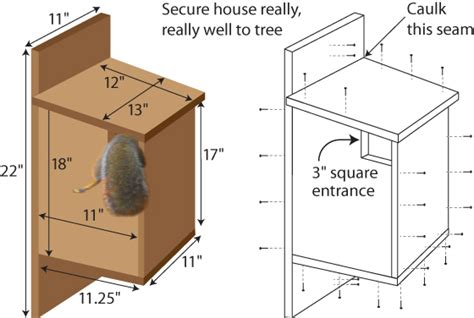 how to design houses how to build a tree house for squirrels skwirlboi