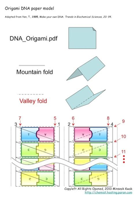 How To Make Dna Origami - origami dna paper model quotes