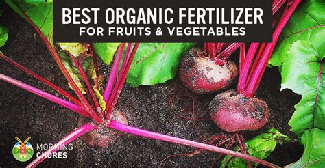 best organic fertilizer for vegetable garden organic fertilizer for vegetable gardens home design