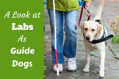 dogs walkthrough guide dogs www pixshark images galleries with a bite