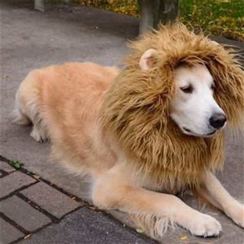 golden retriever costume for person golden retrievers and costume on