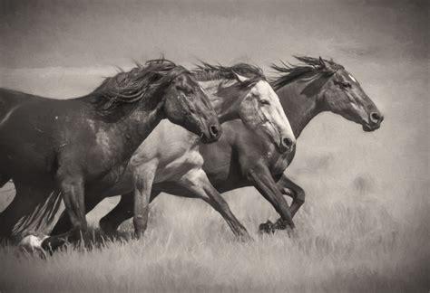 fine art photographs  wild horses photography  wild