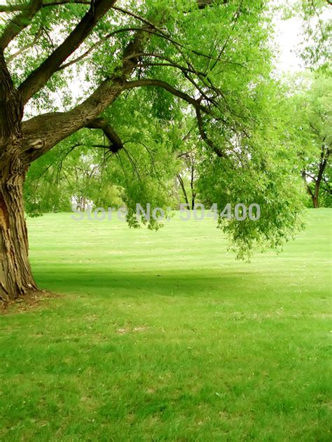 Wedding Backdrop Trees by 5x10ft Flowers Photo Background Trees Garden Loft Wedding