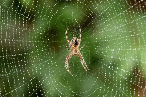 free detailed macro images and stock photos freeimages free spider macro stock photo freeimages