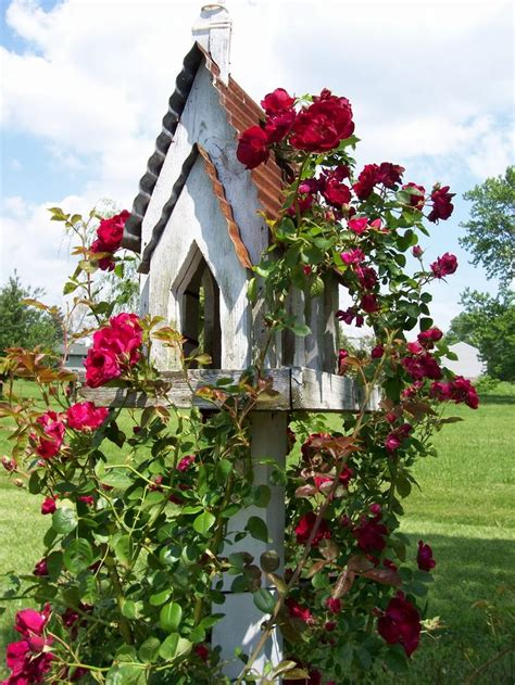 pretty climbing plants 25 best ideas about garden whimsy on spoon