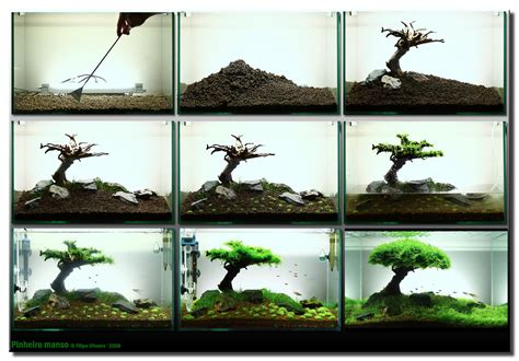 java moss aquascape aquascape tree step by step
