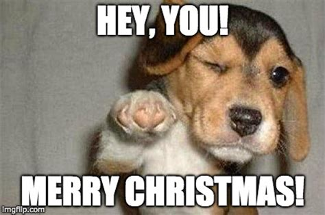 Christmas Doge Meme - holiday dog meme pictures to pin on pinterest pinsdaddy