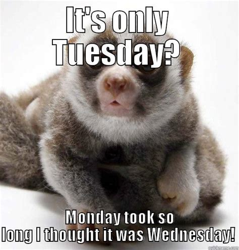 Tuesday Memes Funny - it s only tuesday quickmeme