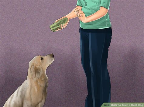 how to e collar your how to a deaf with vibrating collar the best of 2017