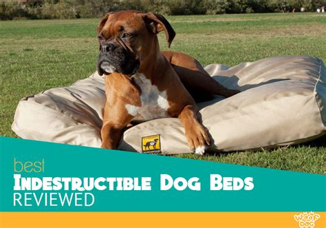 indestructable dog bed the 5 best indestructible dog beds compared the ultimate