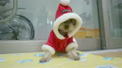 christmas animals animated animals gif by cheezburger find on giphy