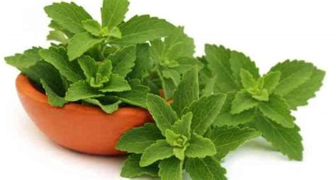 health benefits  stevia  blood sugar level
