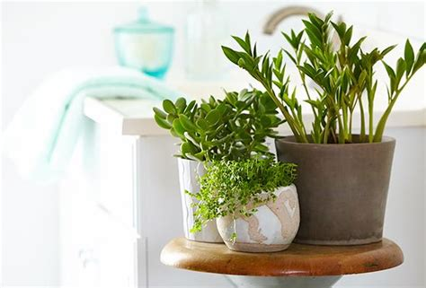 plants for a bathroom without window the 6 best plants for your bathroom p g everyday p g