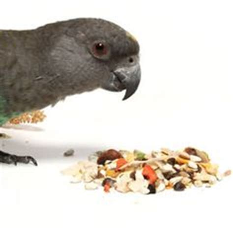 what to feed your birdie on pinterest bird food pet