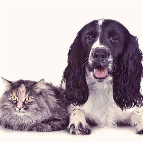 ehrlichia in dogs how to prevent ehrlichiosis in dogs and cats petcarerx