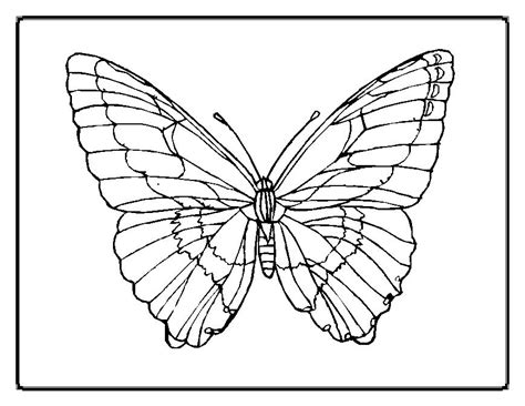 coloring page for butterfly butterfly coloring pages