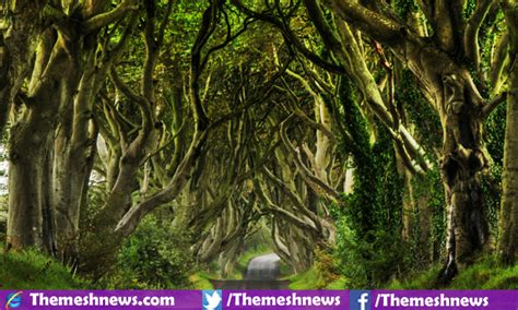 beautiful in top 10 most beautiful trees in the world 2017