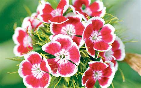 fiori maggio proverbi e detti popolari mese di maggio meteo